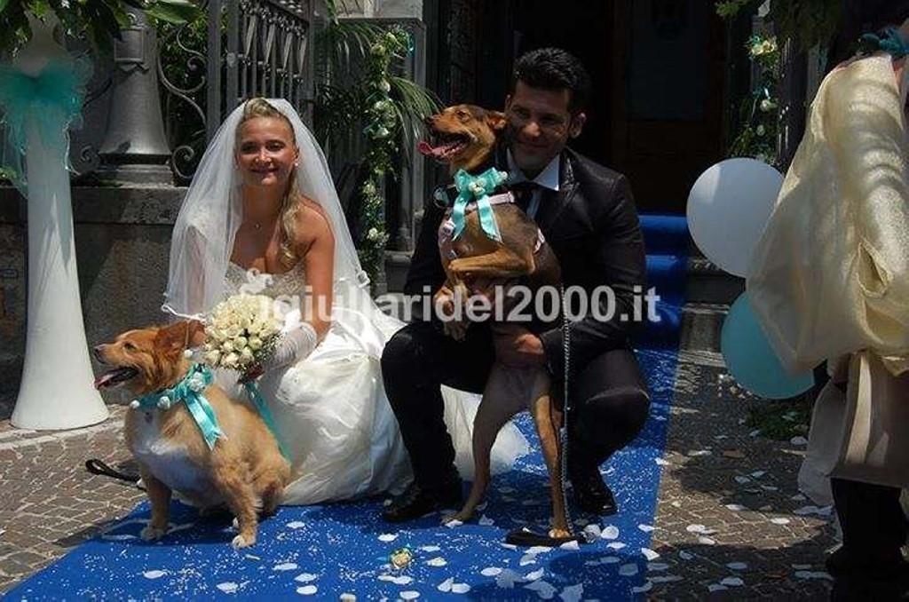 Dogs-Sitter-per-Matrimonio